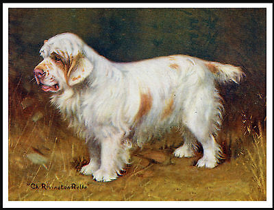 Clumber Spaniel Old Style Champion Dog On Lovely Vintage Style Dog Print Poster