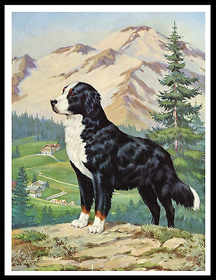 Bernese Mountain Dog Great Vintage Style Dog Art Print Poster