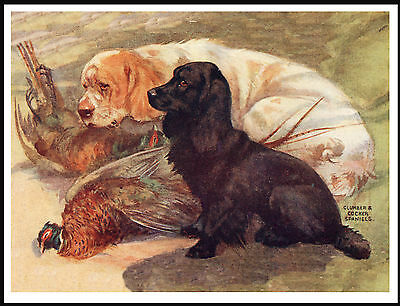 Clumber And Cocker Spaniel Dogs On Lovely Vintage Style Dog Print Poster