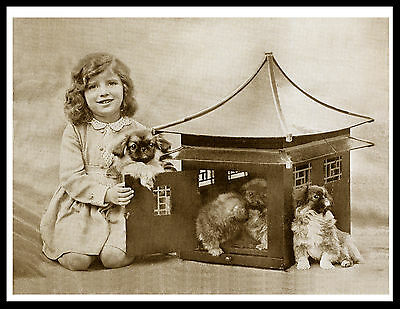 Little Girl And Pekingese Pups Charming Vintage Style Dog Print Poster