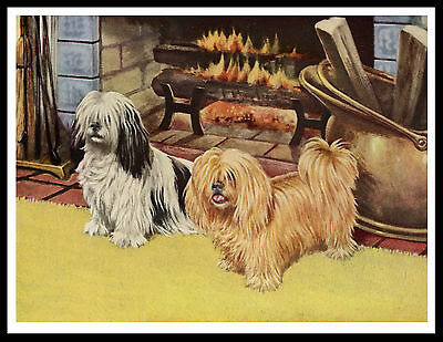 Lhasa Apso Two Dogs By The Fire Lovely Vintage Style Dog Art Print Poster