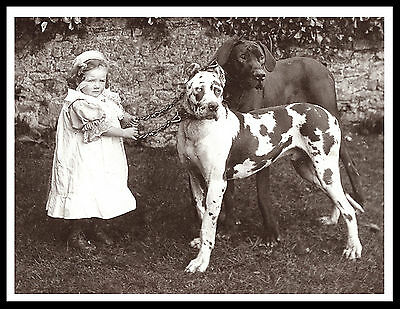 Great Dane Little Girl And Two Dogs Charming Vintage Style Dog Print Poster