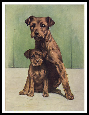 Border Terrier Dog And Puppy Lovely Vintage Style Dog Print Poster