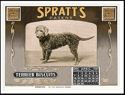 Bedlington Terrier Dog Food Calendar Advert Lovely Vintage Style Print Poster