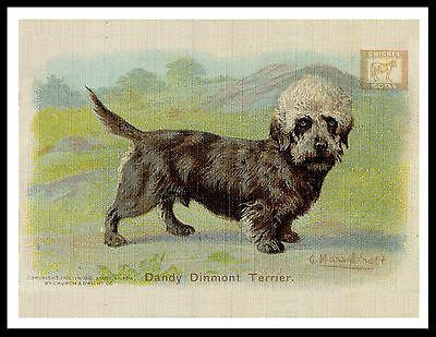 Dandie Dinmont Terrier Lovely Vintage Style Dog Advert Print Poster