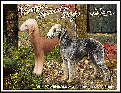 Bedlington Terrier Dog Food Advert Lovely Vintage Style Dog Print Poster