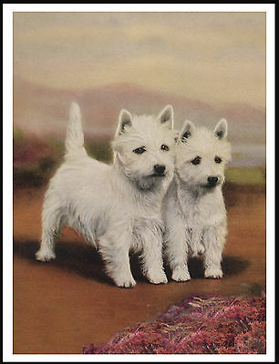Westie West Highland White Terrier Dogs Lovely Dog Print Poster