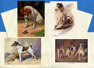 Smooth Fox Jack Russel Terrier 4 Vintage Style Dog Print Greetings Note Cards #2