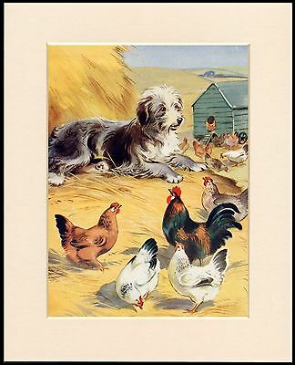 Bearded Collie Charming Farmyard Scene Lovely Dog Print Mounted Ready To Frame