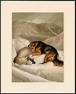 Border Collie Saves Sheep In Snow Lovely Dog Print Mounted Ready To Frame