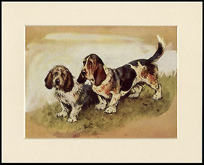 Basset Hound Two Dogs Lovely Dog Print Mounted Ready To Frame