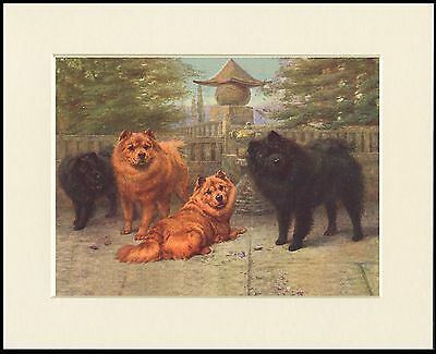 Chow Chow Group Of Old Style Dogs Lovely Print Mounted Ready To Frame