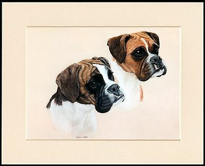 Boxer Two Dogs Lovely Dog Head Study Print Mounted Ready To Frame
