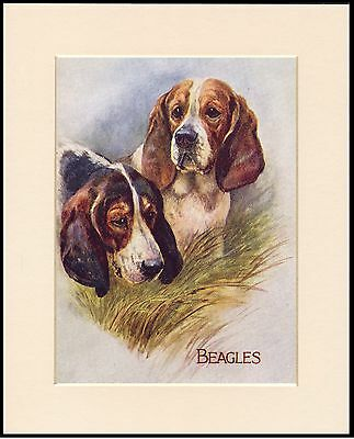 Beagle Two Dogs Head Study Lovely Dog Print Mounted Ready To Frame
