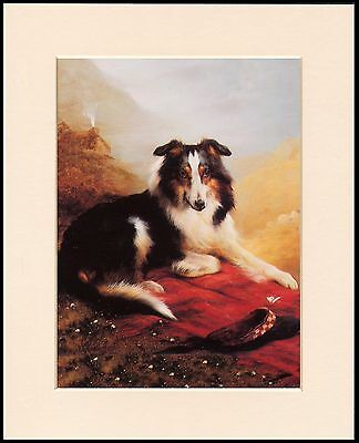 Border Collie Dog On Blanket Cute Little Dog Print Ready Mounted