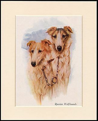 Borzoi Two Dogs Head Study Lovely Dog Print Mounted Ready To Frame
