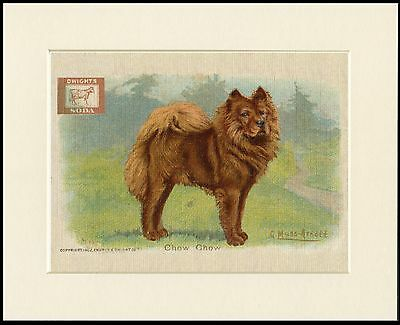 Chow Chow Baking Soda Dog Advert Print Mounted Ready To Frame