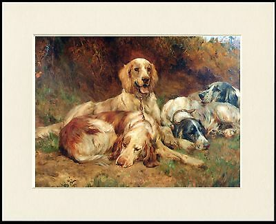 English Setter Dogs At Rest Lovely Dog Print Mounted Ready To Frame