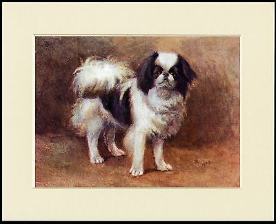 Japanese Chin Charming Dog Print Mounted Ready To Frame