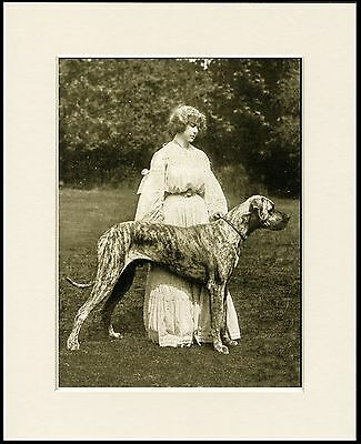 Great Dane And Edwardian Lady Lovely Old Image On Dog Print Ready Mounted