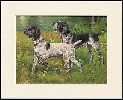 German Shorthaired Pointer  Lovely Little Dog Print Ready Mounted