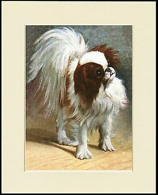 Japanese Chin Charming Little Dog Print Mounted Ready To Frame