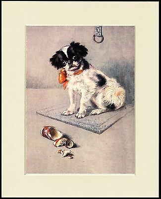Japanese Chin Puppy And Broken Vase Lovely Dog Print Mounted Ready To Frame