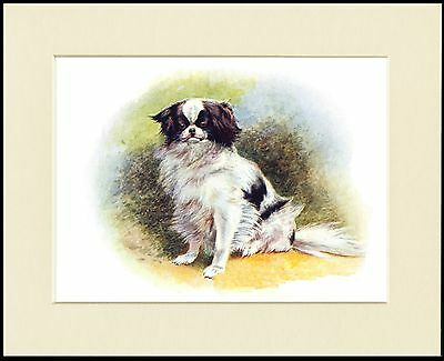 Japanese Chin Little Dog On An Animal Skin Rug Print Mounted Ready To Frame
