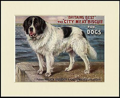 Newfoundland Great Dog Biscuit Advert Print Mounted Ready To Frame