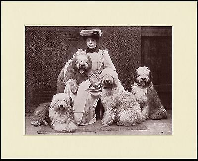 Old English Sheepdog Edwardian Lady And Dogs Lovely Little Print Ready Mounted