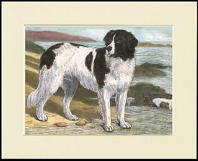 Newfoundland Dog By The Sea Lovely Print Mounted Ready To Frame