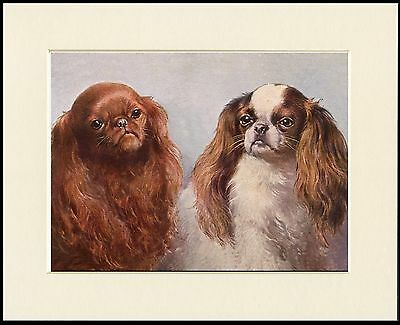 King Charles English Toy Spaniel Dogs Head Study Dog Print Ready To Frame