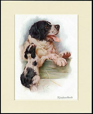 Newfoundland Mother And Puppy Charming Dog Print Mounted Ready To Frame