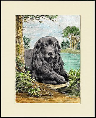 Newfoundland Dog By The Water Lovely Print Mounted Ready To Frame