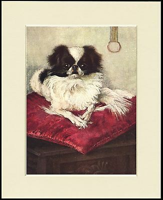 Japanese Chin Little Dog On A Red Velvet Cushion Print Mounted Ready To Frame