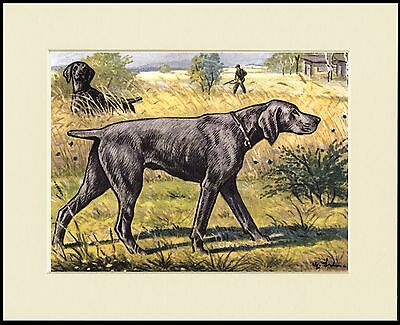 Weimaraner Lovely Dog Print Mounted Ready To Frame