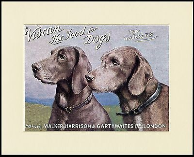 Weimaraner Lovely Dog Food Advert Print Mounted Ready To Frame