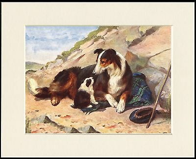 Rough Collie And Puppy Lovely Dog Art Print Mounted Ready To Frame