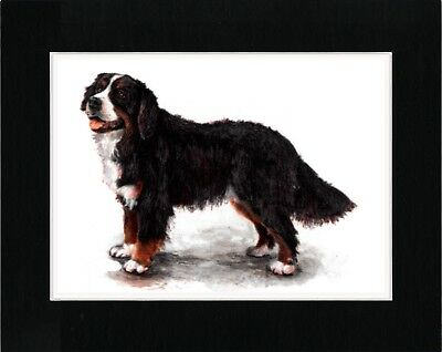 Bernese Mountain Dog Lovely Dog Art Print Matted Ready To Frame