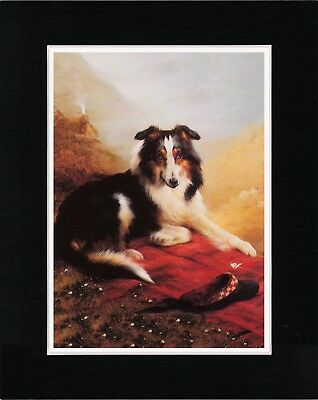 Border Collie Charming Old Style Dog Art Print Ready Matted