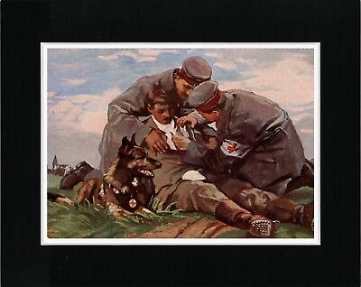 Belgian Shepherd Red Cross War Dog Lovely Old Style Dog Art Print Ready Matted