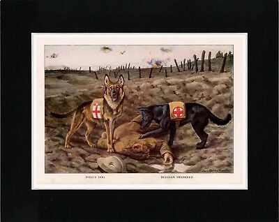 Belgian And German Shepherd Red Cross War Dogs Old Style Dog Art Print Matted