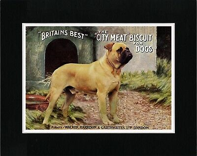 Bullmastiff Lovely Old Style Dog Food Advert Art Print Ready Matted