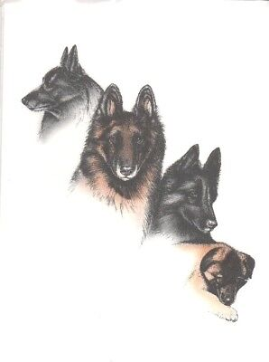 Dogs, Dogs & More Dogs Gorgeous BELGIAN SHEP/TERV  1995 Note Cards NEW - SEALED