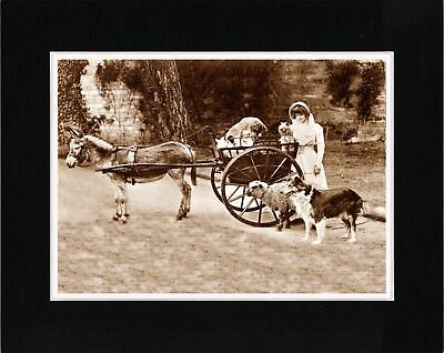 Young Lady With Border Collie Sheep And Donkey Cart Old Style Dog Print Matted