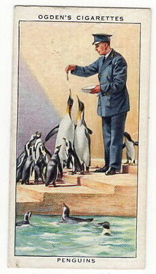 Vintage 1937 Wildlife Painting Card of a PENGUIN