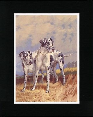 Great Dane Two Harlequin Dogs Old Style Dog Art Print Ready Matted
