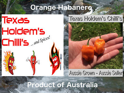 25x Orange Habanero Chilli Chili Seeds Fantastic Orange Hab Flavour ORGANIC