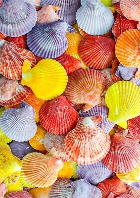 Colourful Seashell Beach Wallpaper A4 Sized Edible Wafer Paper / Icing Sheet