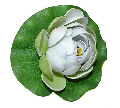 Water Lilly NUPHAR LUTEA dekoseerose dekoteichrose Pond Plant White Yellow Small